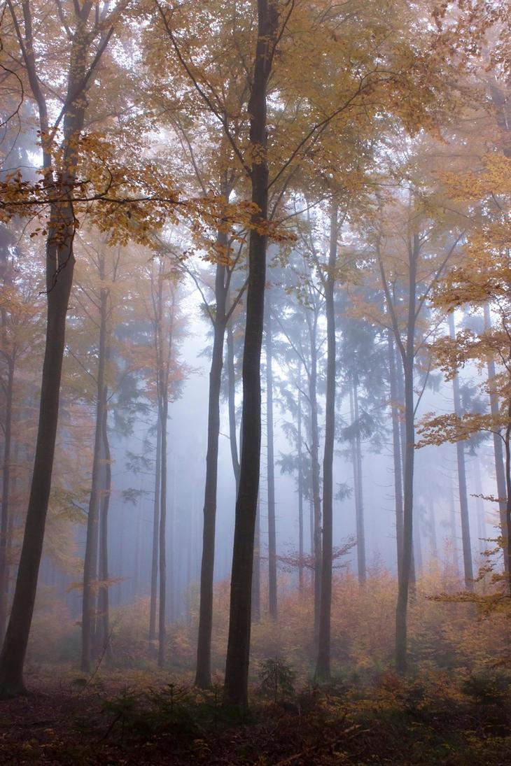 Foggy Woods 3 by Jantiff-Stocks