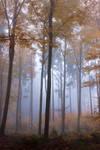 Foggy Woods 3