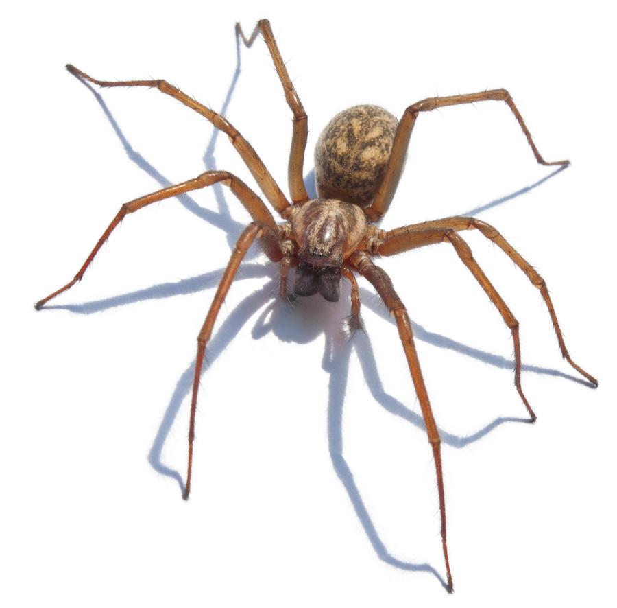 Giant Spider 1