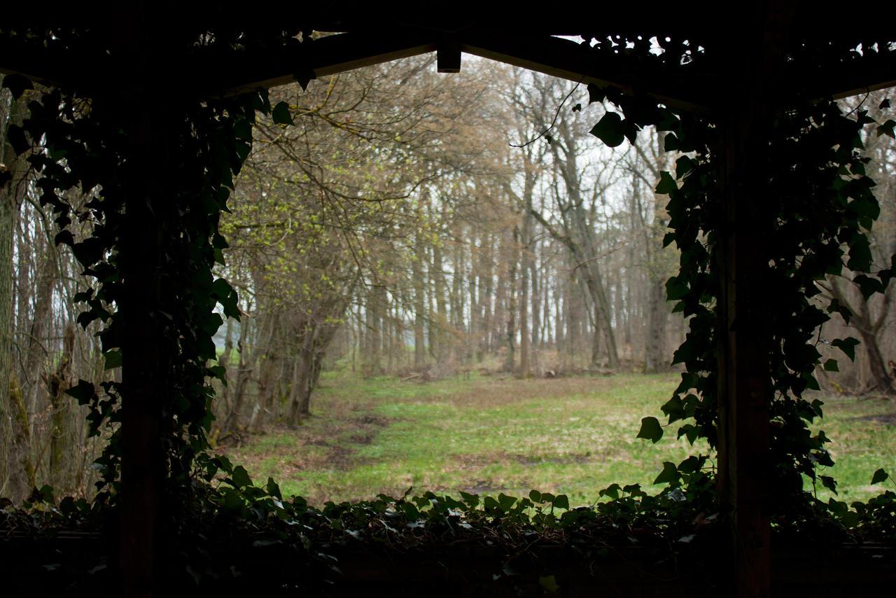 Ivy Border by Jantiff-Stocks