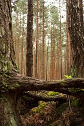 Pinewood #2 by Jantiff-Stocks