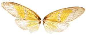 Fairy Wings with Transparence (PNG)