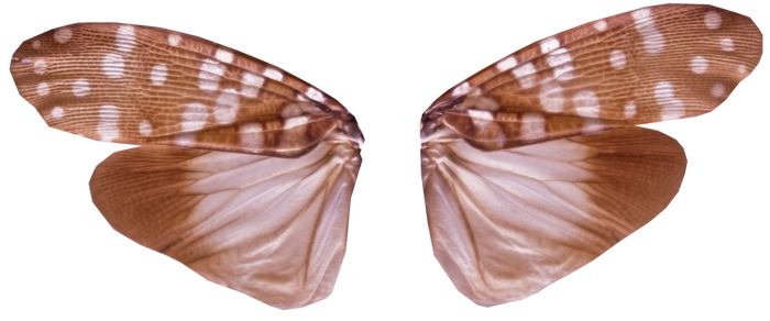 Pixie Wings with Transparency (PNG)
