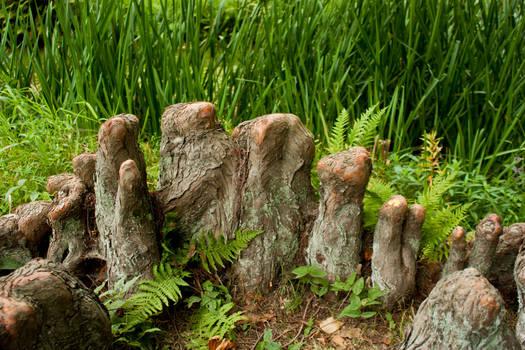 Tree Teeth #2