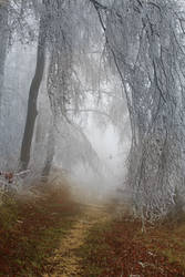 Frost-on-trees