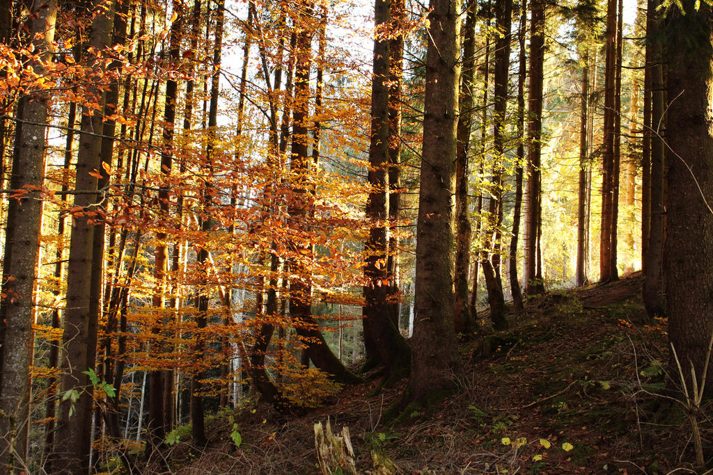 Golden-autumn by Jantiff-Stocks