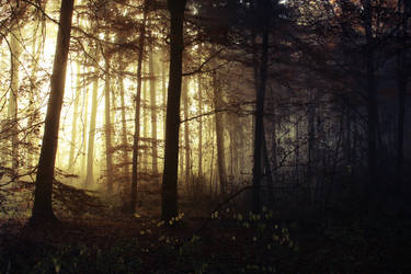 Morning Mists in the Woods 1