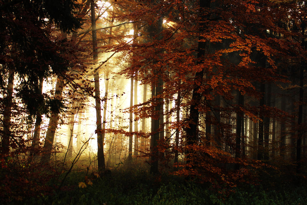 Morning Mists in the Woods 2 by Jantiff-Stocks