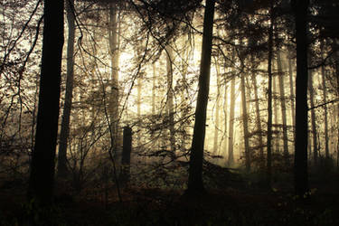Misty Morning in the Woods 3 by Jantiff-Stocks