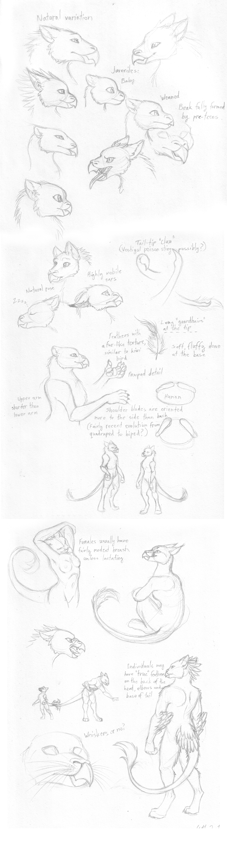 Pseudogryph - concept sketch by merrypaws