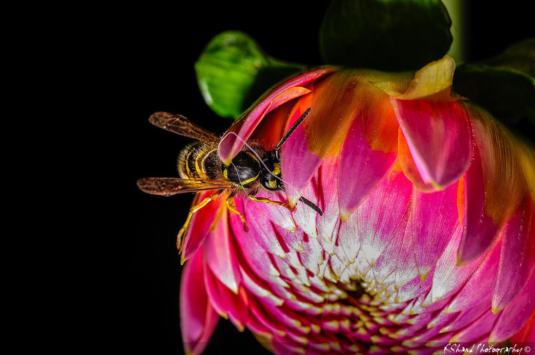 Wasp by Auraomega
