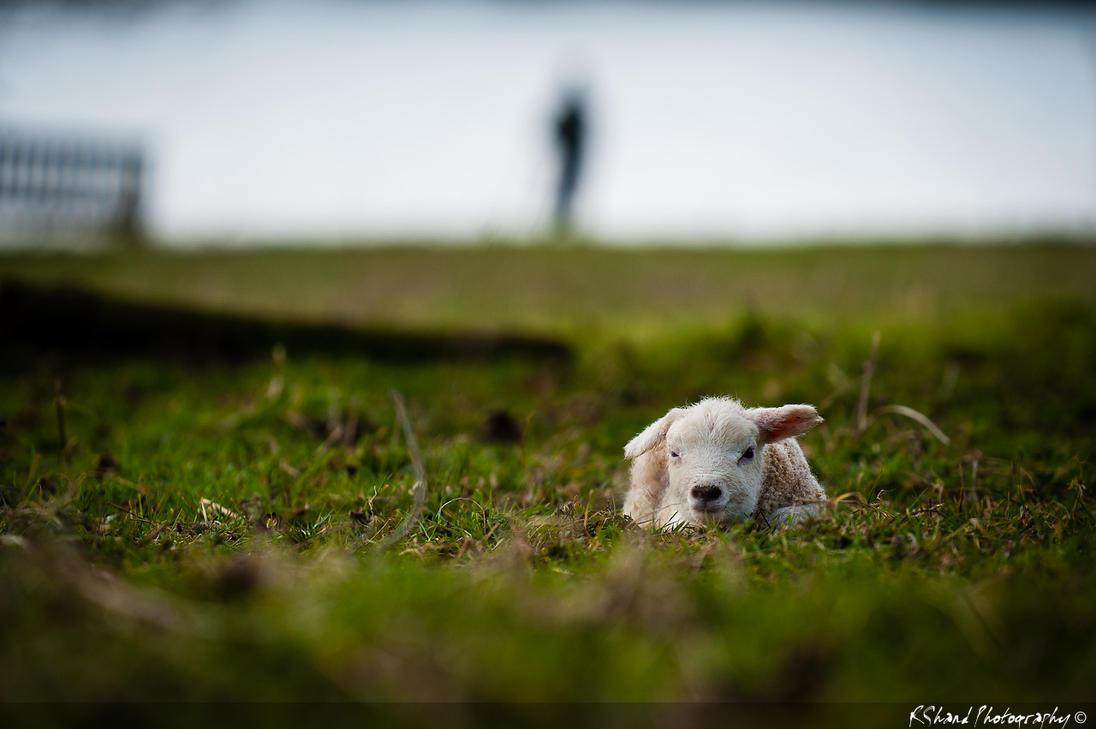 Little Lamb by Auraomega