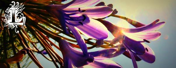 Purple Flower Banner by Sminthian