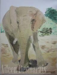 Elephant Artist Knife Watermark