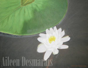 Lily Pad Watermarked