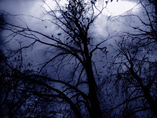 autumn sky by NattTtoll