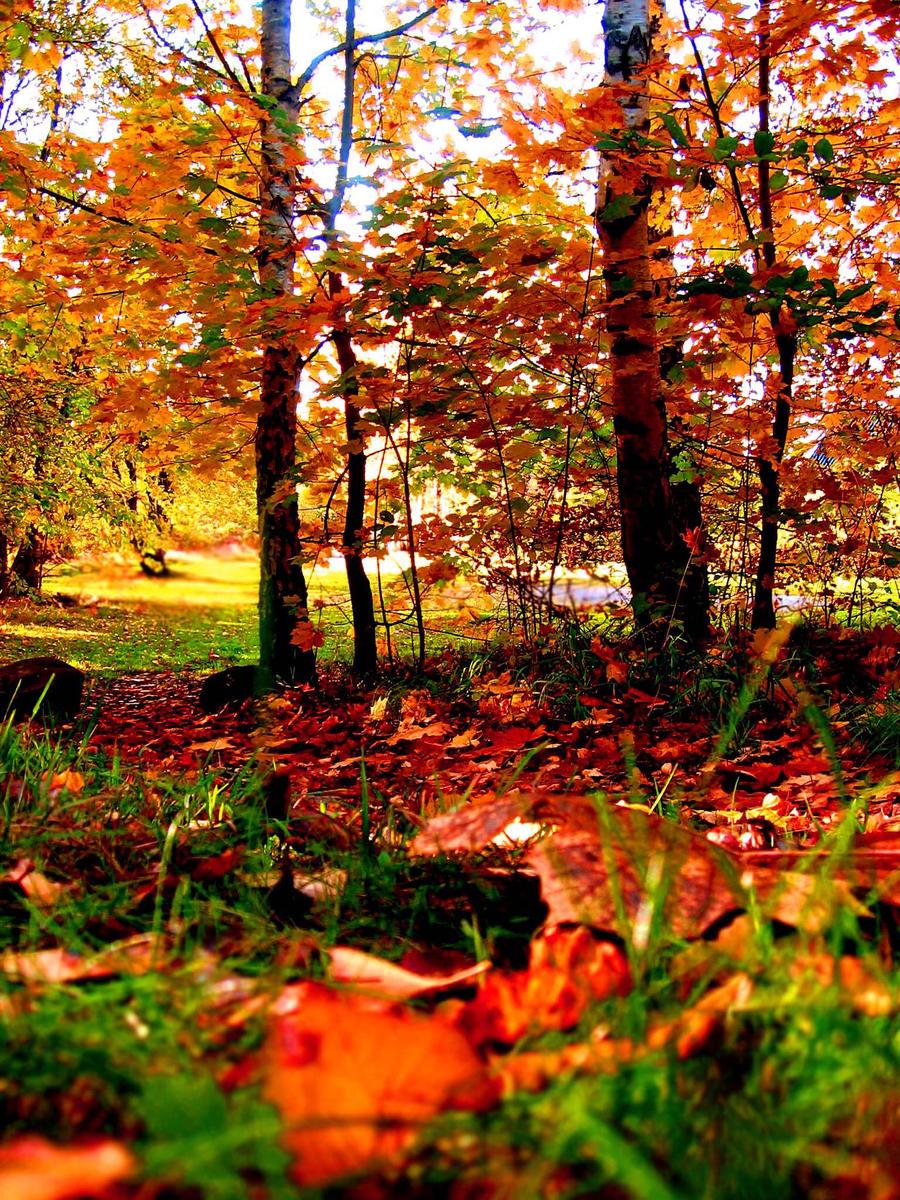 fall by NattTtoll