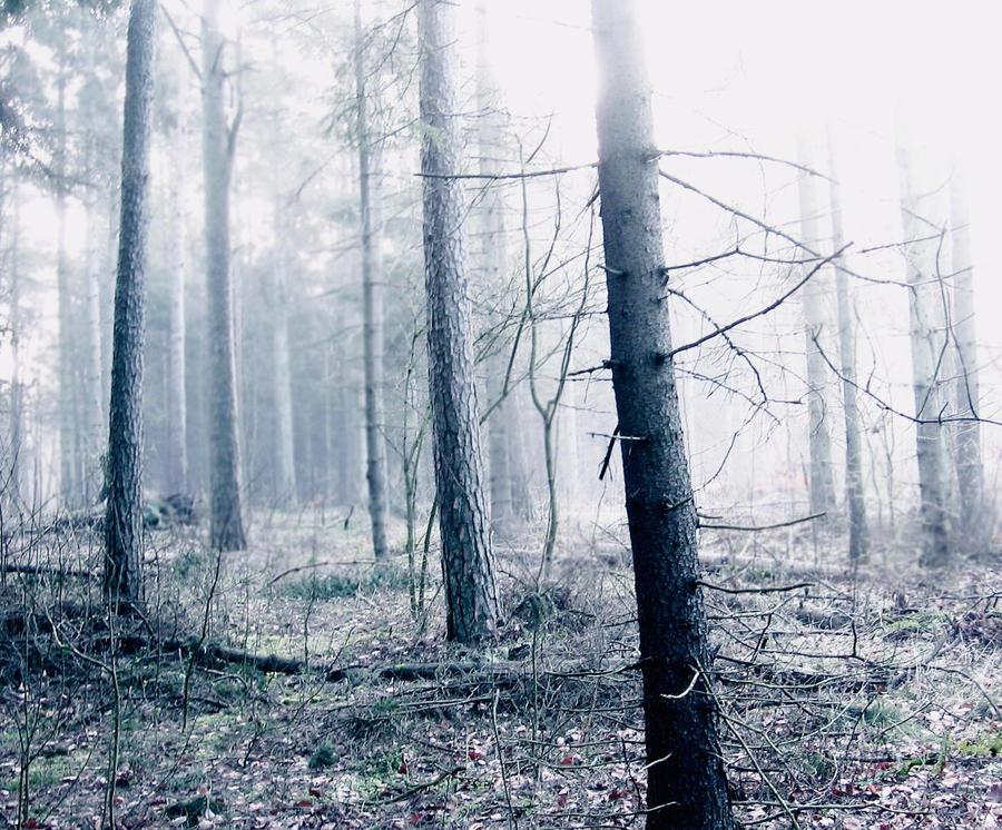 Dimmig morgon. by NattTtoll