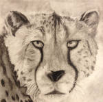 Art IV Charcoal Cheetah