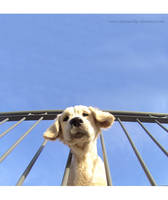 I reach for the sky. by eXtremeBiker