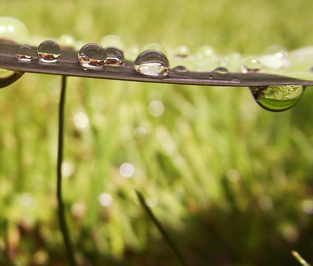 Droplets in the sun by Kokopa
