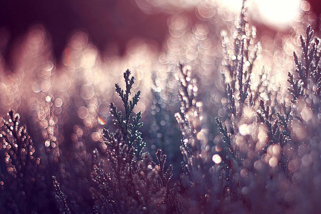 The gift of a winter evening by Kokopa
