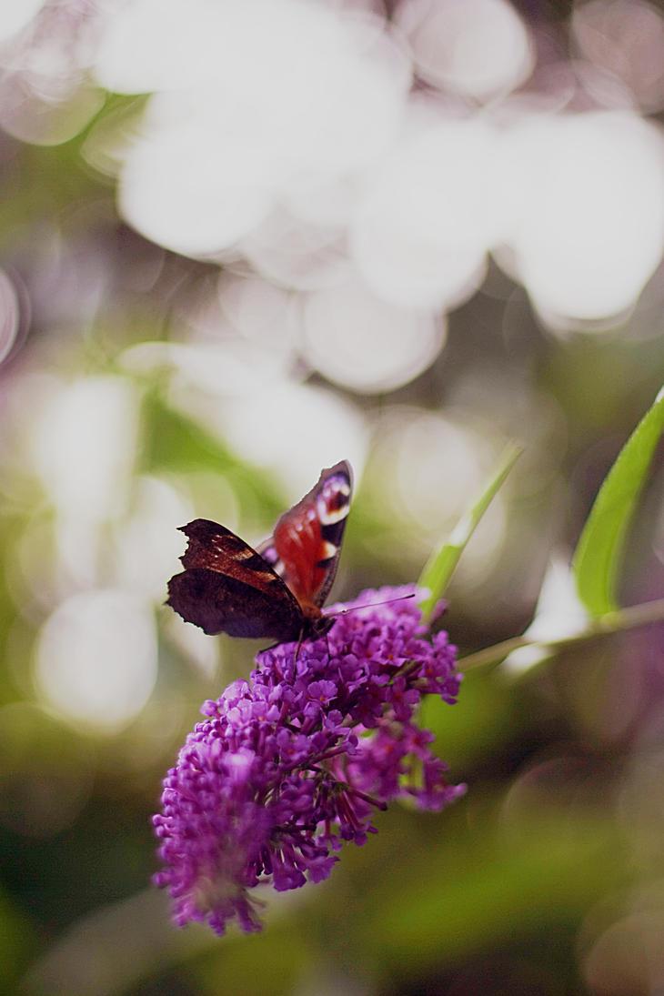 Summer lilac by Kokopa