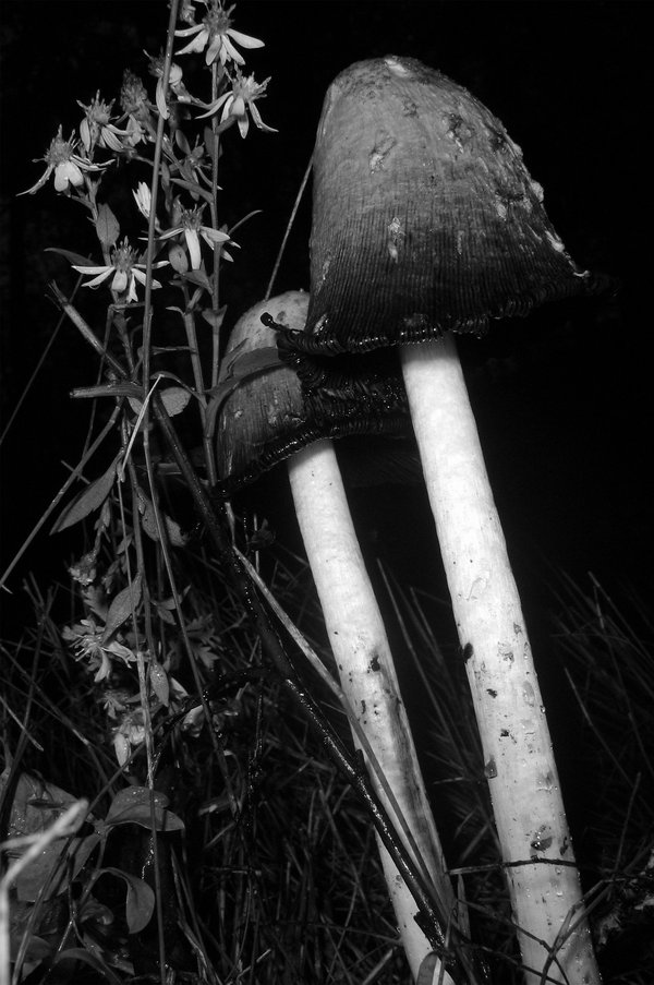 enchanted mushroom wallpaper - photo #24