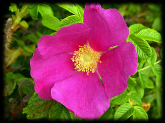 Another pinkish flower