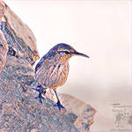 Mosaic Rock Wren by Sofia-the-Dreamer
