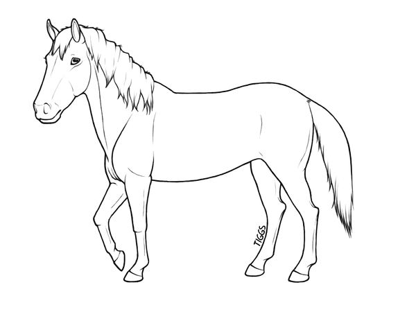 how to draw a horse pictures with color