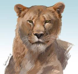 Lioness study by GoldammerArt