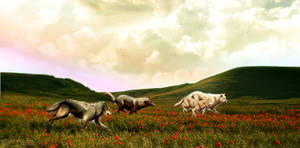 The Pack Home Page Header