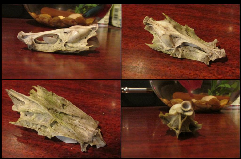 Fish Skull by xDoglate