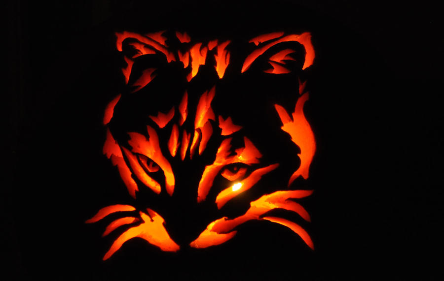 Cat Pumpkin Carving -Lit- by ladybug95