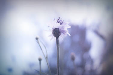 Lilac Hues by WingChant