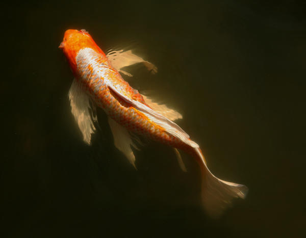 Swimming Girl by Robowan