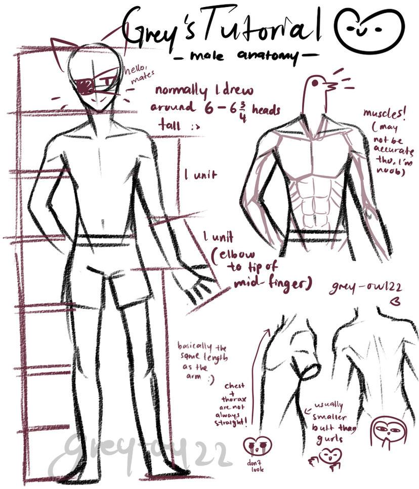 Grey owl\'s Tutorial- (male anatomy) by Greyowl22 on DeviantArt