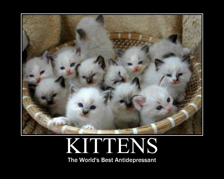 Kitten Motivational Poster by FluidGirl82 on DeviantArt