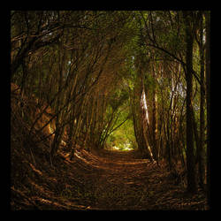 The Wooded Path by JonGoldie