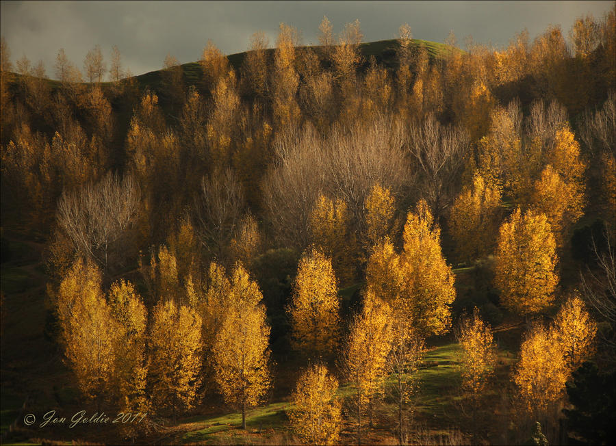 Late Autumn NZ by JonGoldie