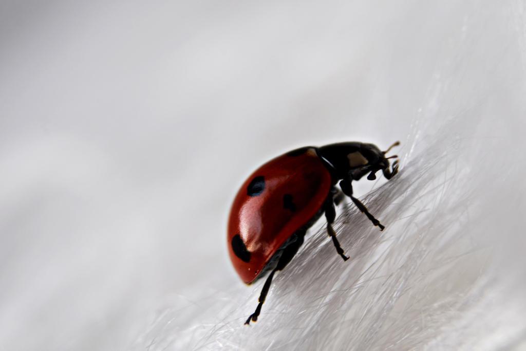 Ladybug by Sunnerdahl