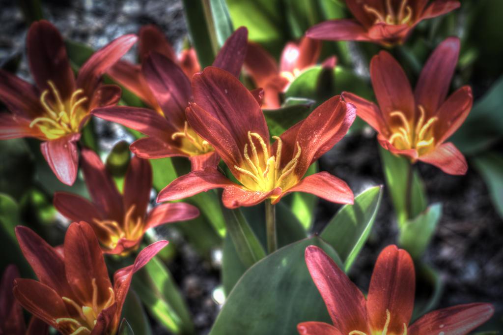 Flowerpower by Sunnerdahl