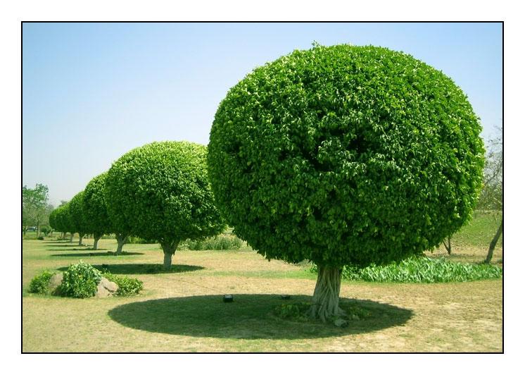 Round Trees By Garazy On Deviantart