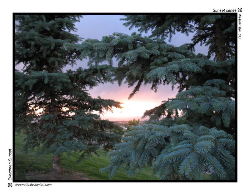 Evergreen Sunset by viruswatts