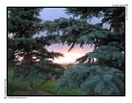 Evergreen Sunset