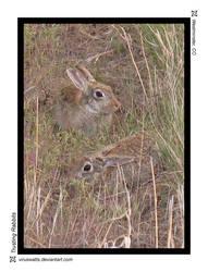Trusting Rabbits