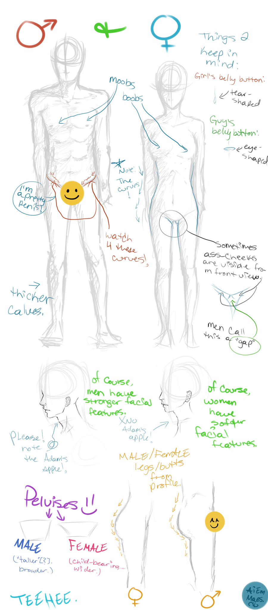 Male vs Female anatomy by wiccimm on DeviantArt