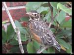 Lovable Bird