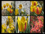 More Pretty Spring Flowers